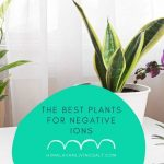 The Best Plants For Negative Ions